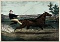 A brown mare pulling a cart with a jockey in a blue sweater. Wellcome V0021773.jpg