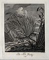 A fox running through reeds near a lake. Etching by J. E. Ri Wellcome V0021056EL.jpg