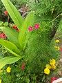 A small Garden 075321.jpg