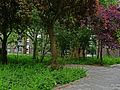 A view on a group of red urban trees in the Plantage-district in Amsterdam; high resolution image by FotoDutch in June 2013.jpg