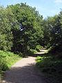 Abbot's Wood - geograph.org.uk - 1425300.jpg