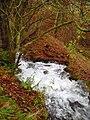 Abernethy Linns - geograph.org.uk - 1595428.jpg