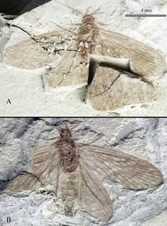 Necrotauliidae