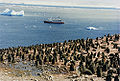 Adelie chicks in antarctica and Ms Explorer.jpg