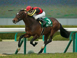 Al Ain (horse) Japanese-bred Thoroughbred racehorse