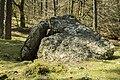 Albi trikuharria-17.jpg