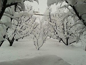 Al-Bitar - It is not unusual to have a white Christmas in Al Btar