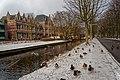 Alkmaar - Wilhelminalaan - View NE along Medisch Centrum Alkmaar (Cadettenschool 1893) - Hungry ducks gathering spontaneously.jpg