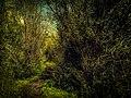Allée des embrumes (El Kala national park).jpg