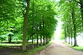 Allee, looking towards Blanche's vase - Chatsworth House - Derbyshire, England - DSC03583.jpg