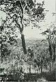 Am Tendaguru - Leben und Wirken einer deutschen Forschungsexpedition zur Ausgrabung vorweltlicher Riesensaurier in Deutsch-Ostafrika (1912) (18138683356).jpg