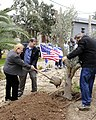 Ambassador Shapiro and Ms. Fisher Plant an Olive Tree (6836246509).jpg