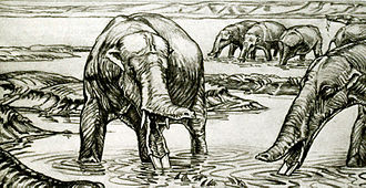Amebelodon - 1932 A. fricki restoration showing a possibly inaccurate short trunk