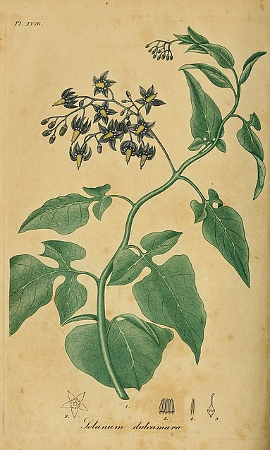 the history of herbal use in europe and native america Herbal remedies in latin america by  europe, latin america and north america show  development of a generic framework on the and latin america use herbal.