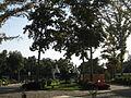 Amin al-Islami Park - Trees and Flowers - Nishapur 026.JPG