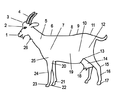 Anatomie chèvre.png