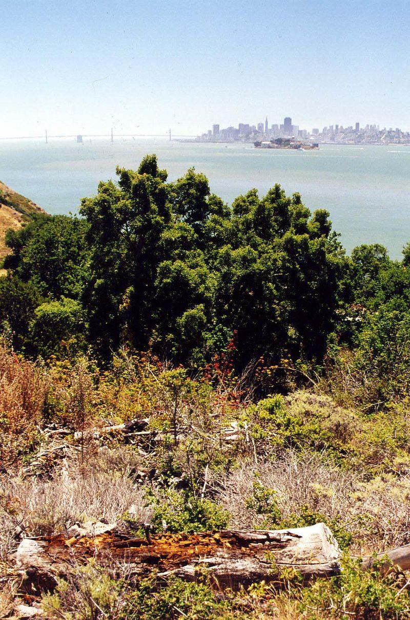 Angel Island, SF.jpg