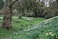 Anglesey Abbey (NT) 02-04-2011 (5699758722).jpg