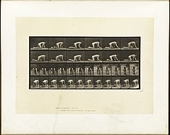 Animal locomotion. Plate 182 (Boston Public Library).jpg