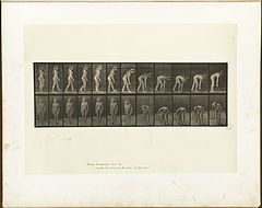 Animal locomotion. Plate 204 (Boston Public Library).jpg