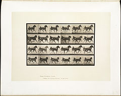 Animal locomotion. Plate 613 (Boston Public Library).jpg