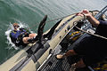 Anti-Terrorism Force Protection Dive Operation DVIDS299530.jpg