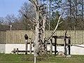 Apes at Tallinn Zoo - panoramio - Aulo Aasmaa.jpg