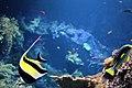 Aquarium de Biarritz - Aquarium of Biarritz.jpg