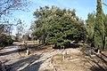 Arboretum de Canet-en-Roussillon le 8 février 2016 - 08.jpg