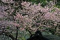 As Cerejeiras, Pavilhão Japones.jpg