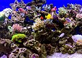 Assorted fish at Jakarta Aquarium, Neo Soho, Jakarta 2018-06-28 04.jpg