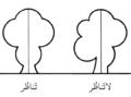 Asymmetric (PSF) ar.png