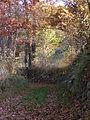 Ateleta sentieri nel bosco.JPG