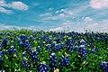 Austin, United States (Unsplash YPLx5eOy49M).jpg