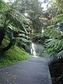 Australian National Botanic Gardens rainforest mist.jpg