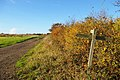 Autumn Hedge at Shipley, West Sussex.jpg