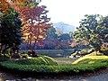 Autumn colours of leaves at Koishikawa Kourakuen IMG 3870.jpg
