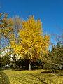 Autumn foliage in Dalian University of Technology.jpg