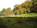 Autumnal Trees in Calderglen Country Park - geograph.org.uk - 1022172.jpg