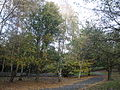 Autumnal trees at Ventnor Botanic Garden.JPG