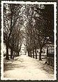Av. Padre Diogo de Vasconcelos, 1933 (Figueiró dos Vinhos, Portugal) (3276551204).jpg