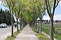 Avenue des Albizzi, Cassis, Provence-Alpes-Côte d'Azur, France - panoramio.jpg