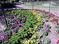 BCBG Rainbow Garden 01.jpg