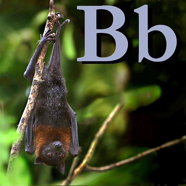 Файл:B is for Bat.jpg