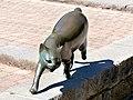 Bad Sassendorf – Bronze-Skulpturen – Katze auf der Salinenmauer - panoramio - giggel.jpg