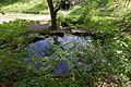 Baden-Württemberg, Aufhausen, Naturschutzgebiet Tierstein mit Hangwald und Egerquelle, WDPA 82716-2.jpg