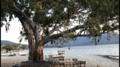 Bafa gölü sahil ve ağaç.png