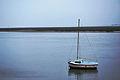 Baie de Somme1.JPG