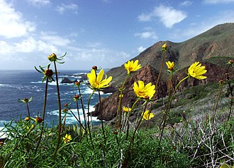 Baja California - Ensenada Municipality coast with Encelia californica, typical of the coastal sage and chaparral ecoregion.