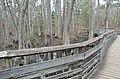 Bald Cypress Trail First Landing State Park-boardwalk-6 (32393624323).jpg